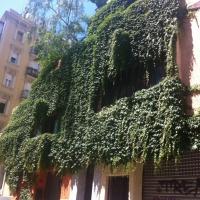 Coberta verda a Fontrodona 86