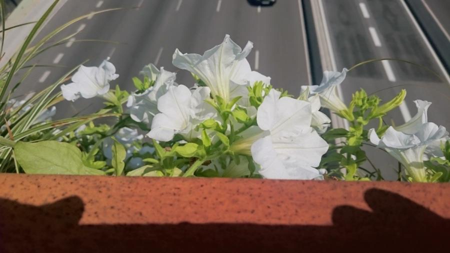 Floreix el Pont