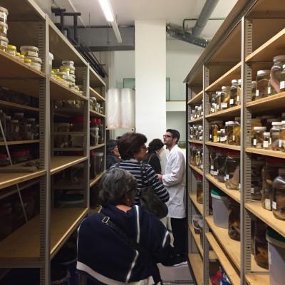 Col·leccions Biològiques de Referència de l'Institut de Ciències del Mar (Col·lecció Zariquiey)