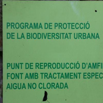 Amfibis al Jardí de Laribal