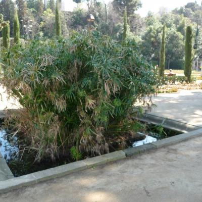 Font de Jardins del Teatre Grec