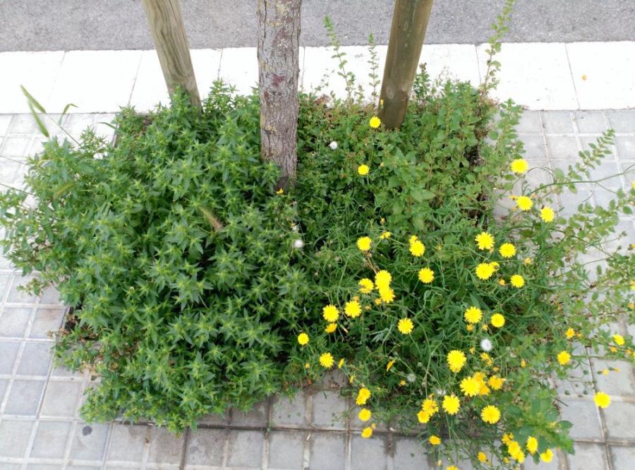 Escocells amb vegetació espotània