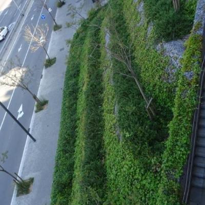 Gabions coberts de vegetació