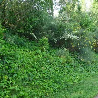 Deixar créixer arbustos