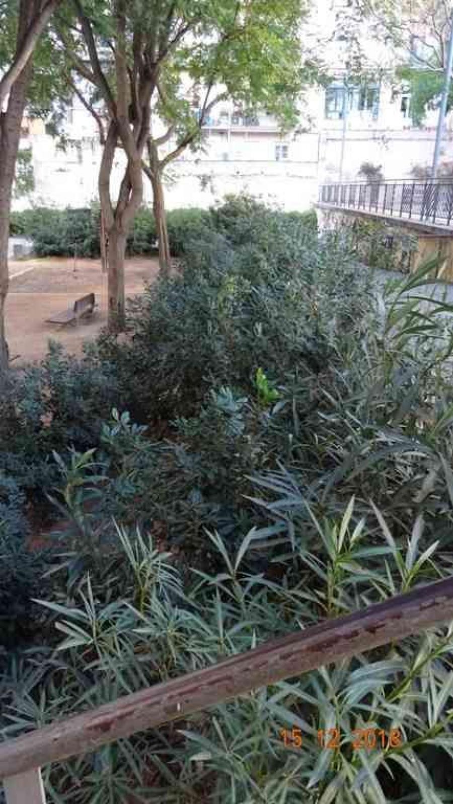 Vegetació talús d'accés al nivell inferior