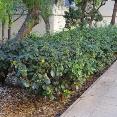 Parterre amb arbustos