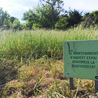Zona verda per afavorir la biodiversitat